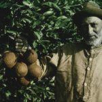 Israel Film Archive Wants All Israeli Film